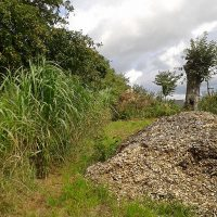 Culture-a-biomasse